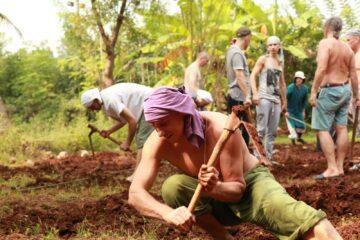 Freiwillige bei der Arbeit auf der Farm des Ashrams