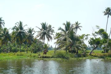 Kultur pur in der Metropolregion Kochi (Kerala)