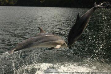 Delphine begleiten das Boot