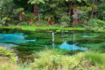 Hamurana-Springs in Rotorua