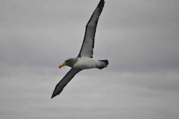 Vogel im Abel Tasman Nationalpark
