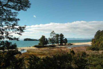 Weisse Bucht mit Nadelbäumen