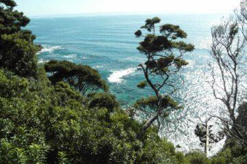 Buschwälder und türkisfarbenes Meer