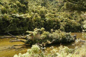 Neuseelands Westküste: Tour durch die Berge der Südinsel
