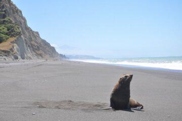 Tierwelt entlang des Kaikoura Coast Track