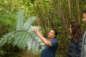 Maori-Guide erklärt den Silberfarn