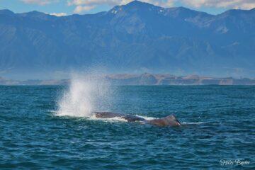 Pustender Wal
