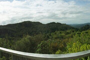 Ausblick auf die Wälder