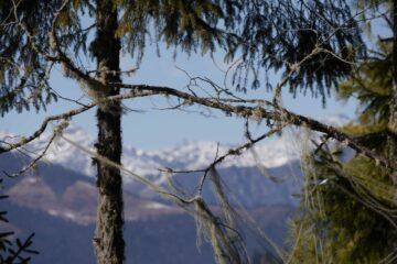 Wald in Bhutan mit Bergblick
