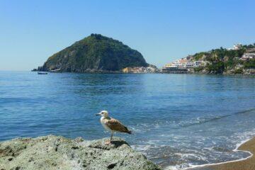 Vogel am Meer