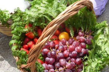 Früchte Ischias
