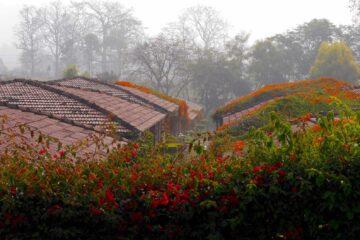 Blick über die begrünten und blühenden Dächer des wami Rama Sadhaka Grana Ashram