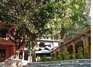 Bäume und Pflanzen im Haidakhan-Ashram