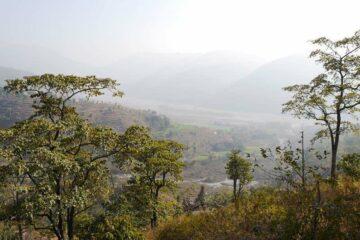 Blick auf Hügel und Reisfelder im Nebel