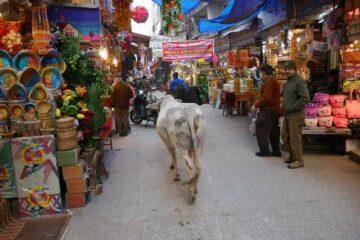 Weiße Kuh marschiert durch Marktstände in Nordindien