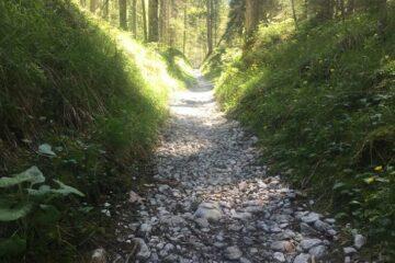 Steinweg dich Wald
