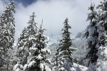 Baumwipfel im Schnee