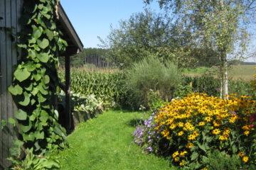 Grüne Wiese mit gelbem Blumenstrauch und blühenden Bäumen