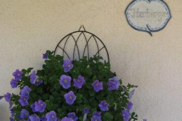 Lila blühende Blumenampel an de Wand