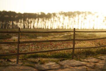 sonnendurchflutete Landschaft mit Zaun auf Wiese und Bäume