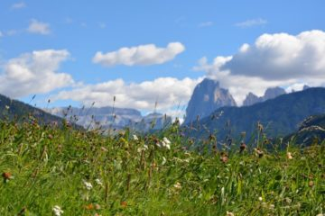 Blumenwiese vor Kulisse der Dolomiten