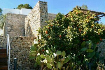 Orangenbäume vor Steinmauer