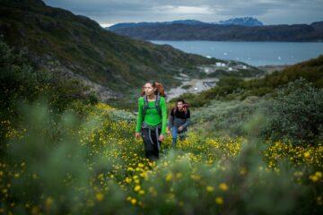 Zwei Wanderer laufen hügelaufwärts vom Fjord durch gelbe Wiesen