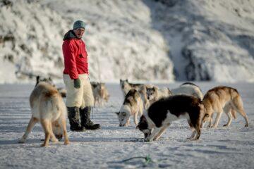 Mann im roten Anorak schaut seinen Hunden beim Fressen zu