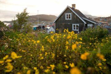 Braunes Holzhaus in gelber Blumenwiese