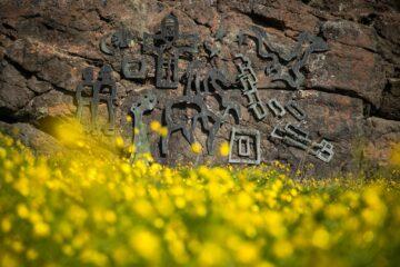 Eisenrunen auf Stein vor gelbem Blumenmeer