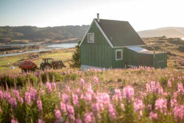 Grünes Holzhaus inmitten von pinken Blumen und Traktor vor dem Haus