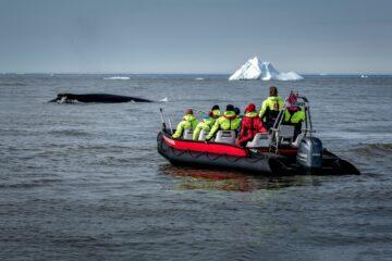 Schlauchboot fährt hinter Wal her