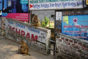 Straße mit Schildern und Affen