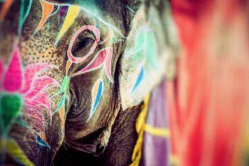Elefantenkopf mit Bemalung