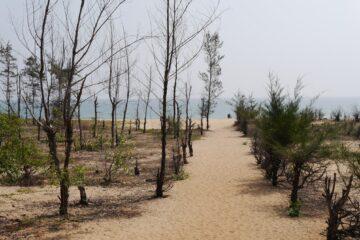 Sanddüne mit Astbäumen und Weg zum Meer