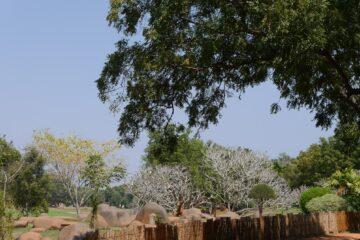Baum mit Zaun und großen Steinen