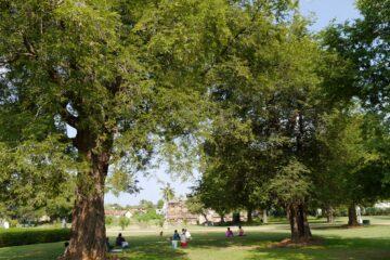 Weite Grünfläche mit Bäumen