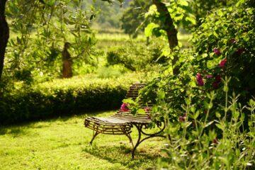 Stuhl am Blütenstrauch