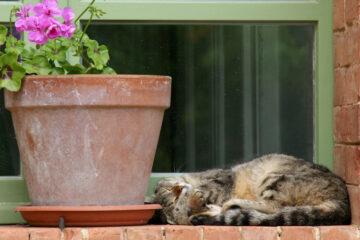 Katze sonnt sich neben Blumentopf