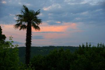 Palme vor Abendrot in Landschaft