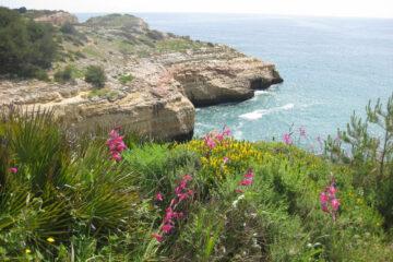 Klippe, Meer und pinke Blumen