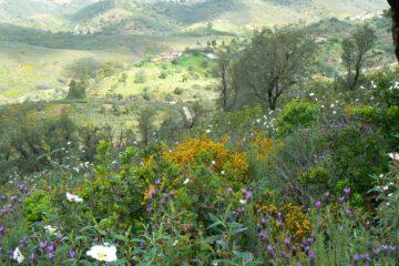 Blühende Wiesen und Hügel