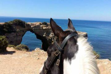Pferdekopf blickt auf das Meer