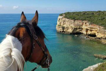 Pferd blickt auf türkisblaues Meer