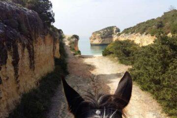 Pferdeohren und gepflasterter Weg Richtung Meer