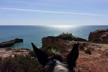 Pferdekopf und Blick auf das sonnenbeschienene Meer