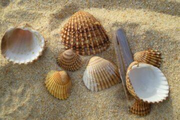 Verschiedene Muscheln im Sand