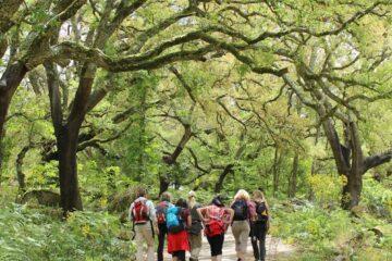 Gruppe wandert unter grünen Bäumen