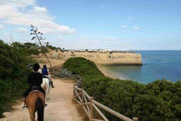 Pferde auf Höhenweg