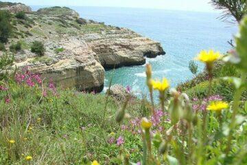 Klippenlandschaft blühend am Meer